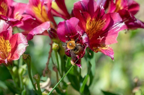 A méhpopuláció kiemelten fontos a beporzás szempontjából - képünk illusztráció