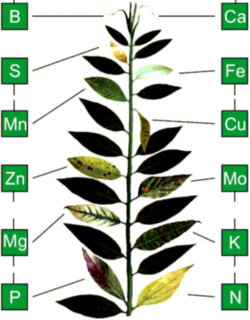 A levél nedv analízisből azt is láthatjuk, hogy milyen transzformációs folyamatok mentek végbe a vegetáció során