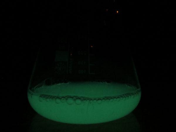 Aliivibrio fischeri sejttoxicitási teszt - Fotó: SZIE