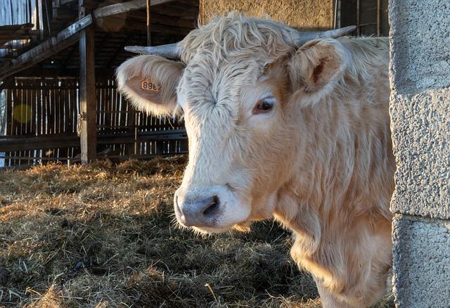 Megkezdődött a koronavírus-járvány miatt nehéz helyzetbe került agrárvállalkozások átmeneti támogatásainak kifizetése (Fotó: Pixabay, Pat_Scrap)