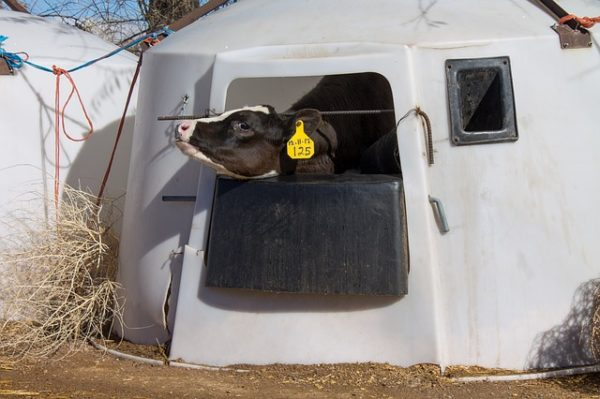Új állatkínzás-ellenes büntetőjogi index segíti az országok közötti összehasonlítást - képünk illusztráció
