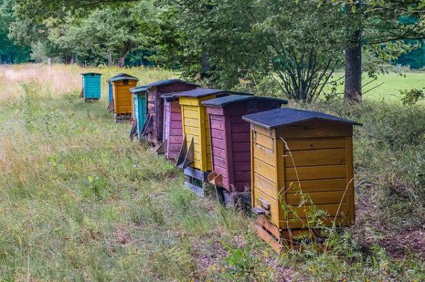 Kaptárak és velük együtt méhek tűntek el Baranyában és Zalában, a tolvajokat keresik - képünk illusztráció