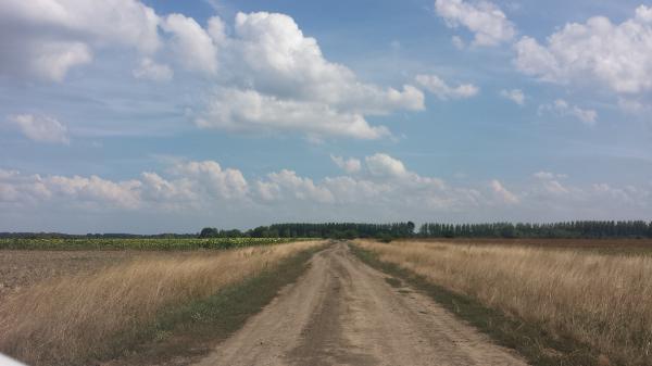 A kárenyhítési hozzájárulás befizetésére már csak szeptember 15-ig van lehetősége az érintett gazdálkodóknak - Fotó: Magro.hu - CSZS