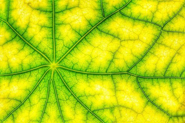 A fotoszintézis több részfolyamatán is sikerült javítania a kutatóknak a szabadföldi kísérlet során - képünk illusztráció