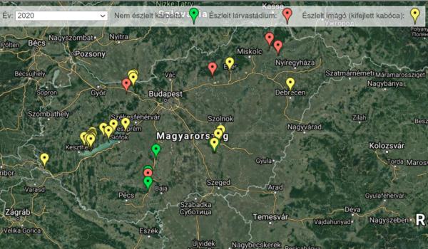 Pillanatnyi állapot a szőlőkabóca észleléséről a Nébih térképén 2020. szeptember 18-án