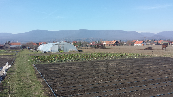 Átrendeződhetnek a birtokviszonyok a szomszédban: a jövőre nyíló ukrán földpiac rengeteg adásvételt hozhat - Fotó: Magro.hu, CSZS - illusztráció