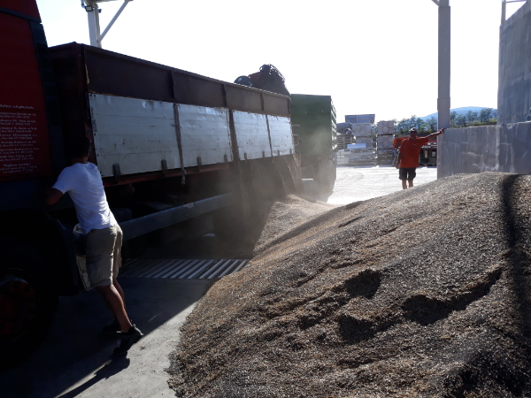 Meghosszabbított határidőt állapítottak meg a fiatal mezőgazdasági termelők számára kiírt támogatásban - Fotó: Magro.hu, CSZS, Verőce