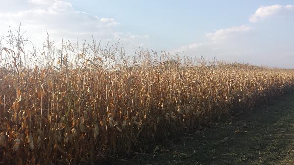 A növénypusztulás a felhasználás észszerűtlen gyakorlatának is köszönhető a tudósok szerint - Fotó: Magro.hu, CSZS
