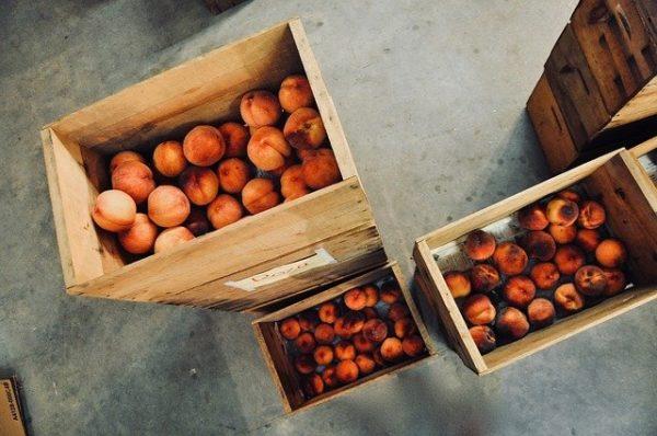 Startupokkal közreműködve javítja a magyar barack helyzetét a siófoki gyümölcslégyártó