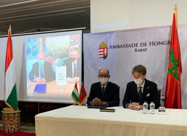 Megállapodott a marokkói és a magyar vetőmagipar két fontos szervezete: Afrikában is szereplője lehet a kutatásnak és a fejlesztésnek a hazai szakma. A képen Khalid Benslimane (balra) és Tromler Miklós egy asztalnál, Takács Géza (balra) és Polgár Gábor pedig kivetítőn a megállapodás alkalmával