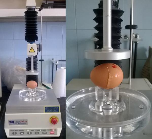 Kísérlet a tojás újszerű hasznosítására