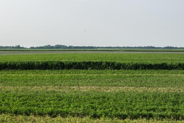 A Genetikai olló sok lehetőséget nyit meg a mezőgazdaság számára is - Fotó: Adam's Photovision, Dunapataj