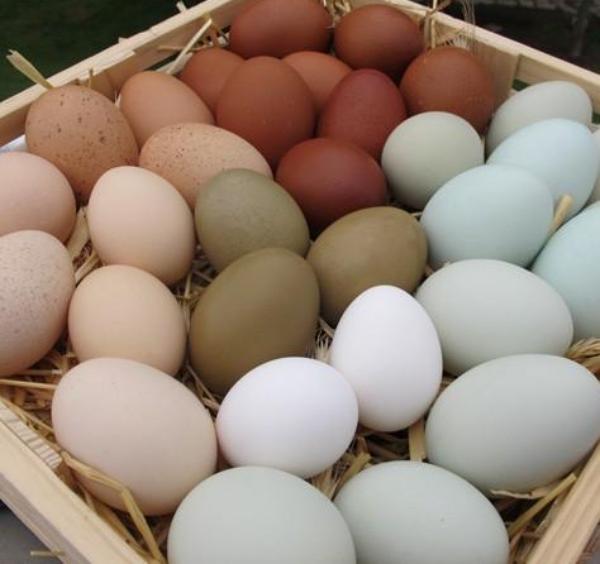 Érdekes és hasznos SZIE-szabadalmak kerülhetnek hamarosan kereskedelmi forgalomba, ilyen az okos tojás is
