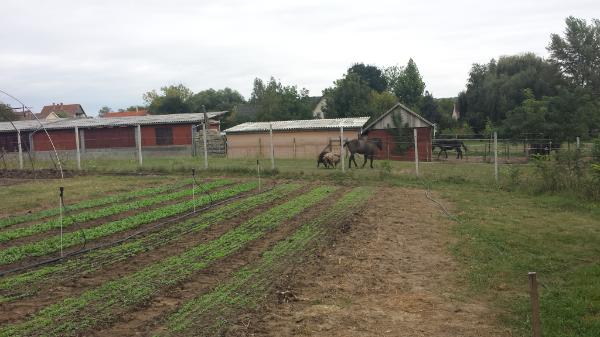 A családi mezőgazdasági társaság feltételrendszere az egyéni vállalkozók számára is teljesíthető - Fotó: Magro.hu, CSZS, Veresegyház