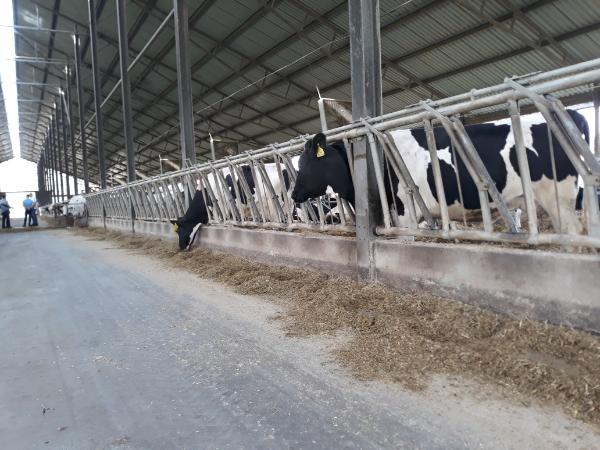 Generációváltás a magyar mezőgazdaságban: 2021-ben elkészülhet az átfogó szabályozás, ami segíti a folyamatok zökkenőmentes átadását - Fotó: Magro.hu, CSZS, Hajdúnánás