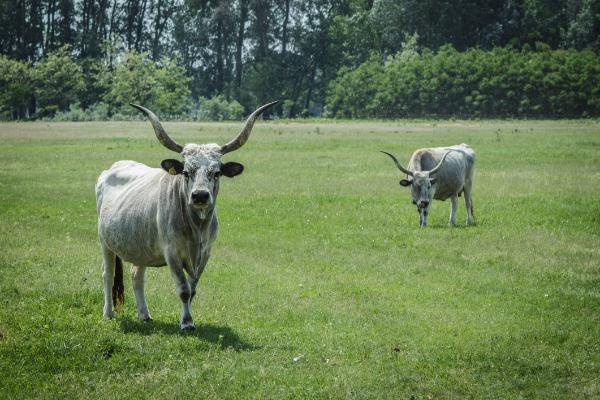 Először vesz részt Magyarország ERA-NET típusú uniós kutatásfinanszírozási eszköz konzorciumában, a fertőző állatbetegségek vizsgálatán dolgoznak - Fotó: Adam's Photovision, Jászszentlászló