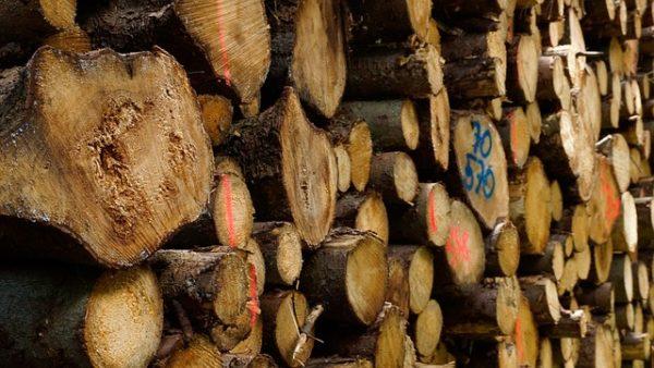 Az erdészeti szaporítóanyag-termesztési ágazat szereplői 1 milliárd forintra pályázhatnak 2021. január 12-től