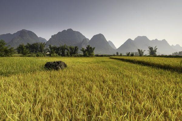 Kevesebb termőföldre lesz szükség a mezőgazdaság számára, ha az akvapónia technológiája elterjed - képünk illusztráció