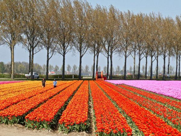 Az automata mezőgazdasági gépek előretörésére számítanak a holland agrárszakemberek - képünk illusztráció