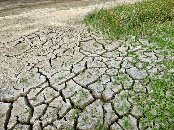 Nagyon rosszul járhatnak a klímaváltozás elleni harcban a gazdák, ezért meg kell védeni a növényeket