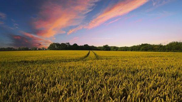 Az európaiakat és a magyarokat is kérdezte az EU a Közös Agrárpolitika és a támogatások témáiról - képünk illusztráció