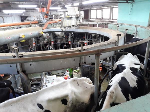 Meghosszabbították a szarvasmarha tej-állatjóléti felhívás kötelezettségvállalási időszakát február 22-ig - Ennek eredményeképp március 11-ig lehetőség van a kötelezettségvállalási időszak meghosszabbítására irányuló kérelem visszavonására - Fotó: Magro.hu, CSZS, Debrecen