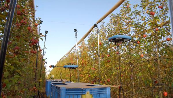 Az izraeli Tevel gyümölcsszedő robotjai munka közben - Fotó: Tevel-tech.com
