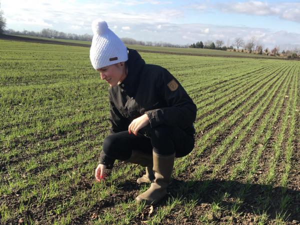 Az őszi búza állományát szemlézi Jelinek Réka, aki 2019-ben diplomázott a precíziós mezőgazdasági szakmérnök szakirányú továbbképzési szakon a Széchenyi István Egyetem Mezőgazdaság- és Élelmiszertudományi karán, Mosonmagyaróváron
