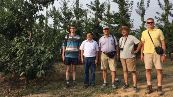 Összefogás a cseresznyetermesztés érdekében - Cai Yuliang professzor (balról második) és Hrotkó Károly professzor (középen) a tongchuani cseresznyésben(Forrás: China Media Group)