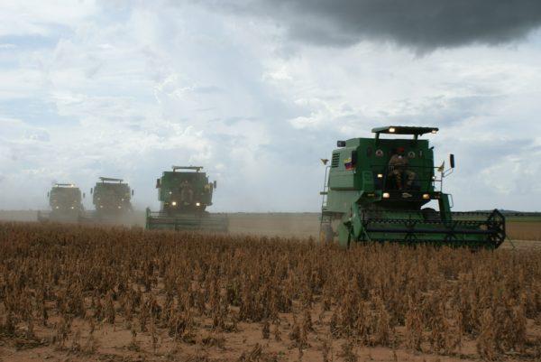 Tőzsdeinfók: Argentínában gyengébb lett a szójatermés a vártnál, a maláj pálmaolaj pedig visszatérítette az előzetesen kalkulált esést