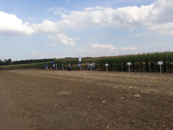 Nagy gondban lehetünk a talaj nélkül: fontos érdekességeket gyűjtött össze a termőközegről a NAK - Fotó: Magro.hu, CSZS, Bábolna