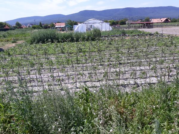 Ökológiai gazdálkodás Tahitótfalun - Fotó: Magro.hu, CSZS