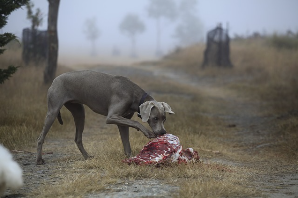 A kutyaelejtés szabályait a vad védelméről, a vadgazdálkodásról, valamint a vadászatról szóló törvény szabályozza