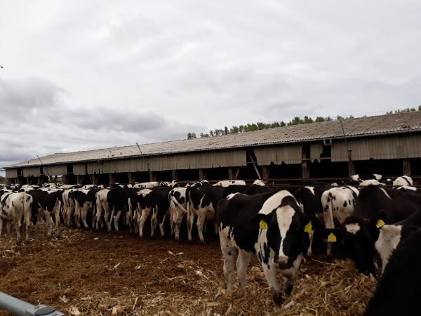 A takarmánydrágulás nagyon megnehezítette az állattenyésztők dolgát - Fotó: Magro.hu, CSZS, Debrecen