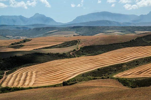 Búzatáblák Dél-Afrika Nyugati-Fokföld tartományában, Swellendamban