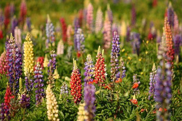 A csaknem 349 ezer hektáros gyepek a növényi fehérjék teljes felületének  92%-át teszik ki