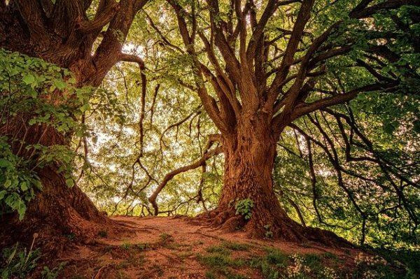 A kormány terve a francia erdők nagymértékű újratelepítését  foglalja magában
