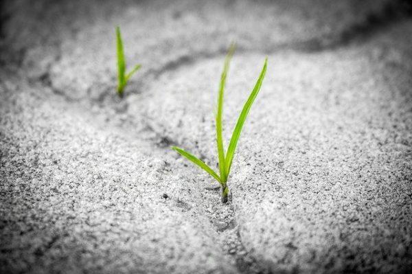 Talajmenti fagy esetén  az értékes növényeket éjszakára agyagcseréppel lehet megvédeni az elfagyástól