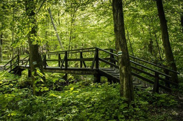 Újutat választ az erdőgazdálkodás megvalósítására a Pilisi Parkerdő