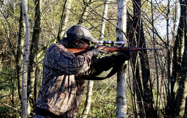 Magyar fejlesztésű vadgazdálkodási rendszer biztosíthatja Írország erdeinek jelentős részét - képünk illusztráció