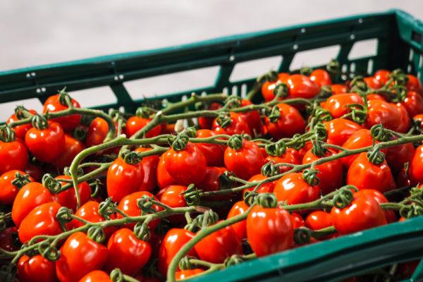 Beindult a magyar zöldségek szezonja