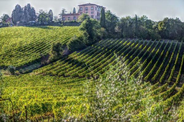 A szőlő a fokozott építkezés áldozatává vált, pedig ilyen is lehetne