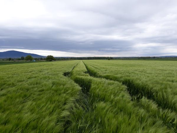 A génszerkesztési szabályozás miatt írt nyílt levelet az Európai Bizottság alelnökének több szervezet, köztük 5 magyar is - Fotó: Magro.hu, CSZS, Tahitótfalu