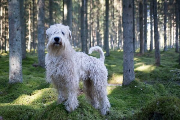 Vadászterületre kutyát kizárólag pórázzal lehet(ne) kivinni