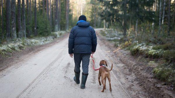 A kutyatartók a vadászati hatóságtól tudhatják meg, hogy a kutyájukkal rendszeresen látogatott terület vadászterületnek minősül-e