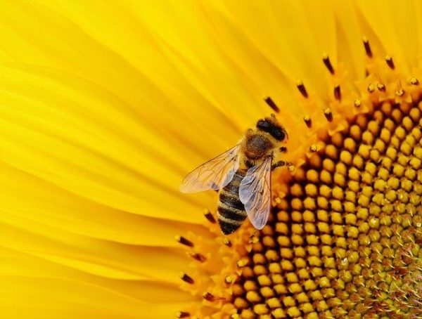A hasznos rovarok ezekről a táblákról mind virágport, mind nektárt bőségesen tudnak gyűjteni