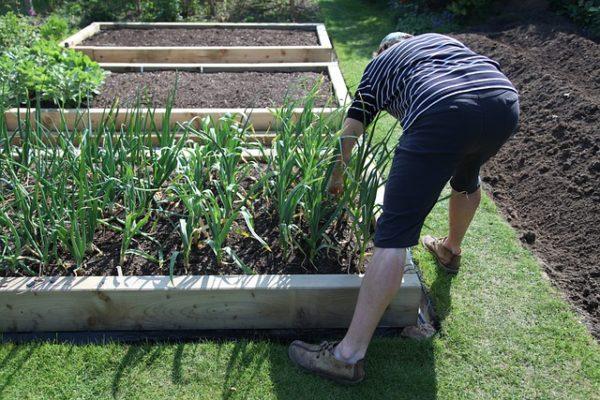 Az alacsonyabb növényeket a veteményes vagy virágágyás szélén külön sorba vagy szegélynövényként lehet ültetni