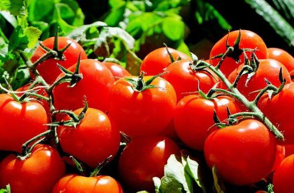 Több mint ezer tonna külföldről behozott paradicsomot váltanak ki  hazai termeléssel