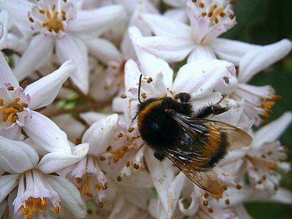 Poszméheket alkalmaznak a természetes beporzás érdekében