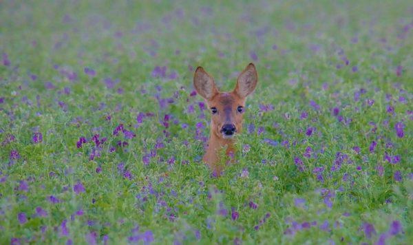 A vadállomány optimális fenntartása a vadászatra jogosult elemi érdeke